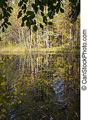 Swamp in wild taiga in autumn