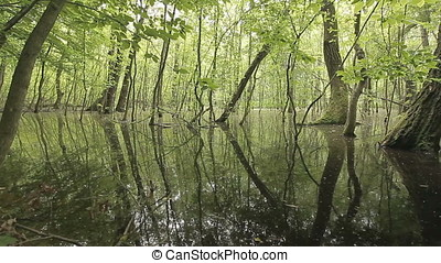 Swamp Landscape at Sunset - Swam landscape at sunset. Wild...