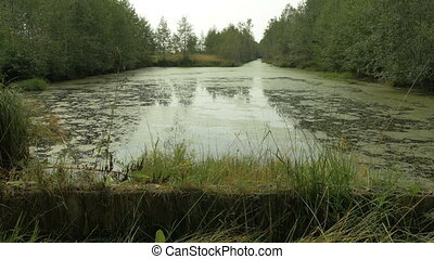 Swamp pool in the national park reserve. Autumn daytime. Smooth dolly shot