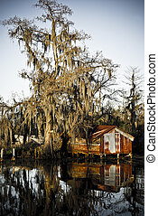 Cypress tree reflections in the St Charles Parish swamps of New Orleans.
