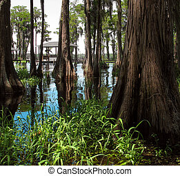 Swamp - Beautiful swamp on a bright sunny day