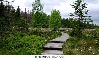 swamp Torfhausmoor track