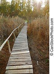 Swamp walking path