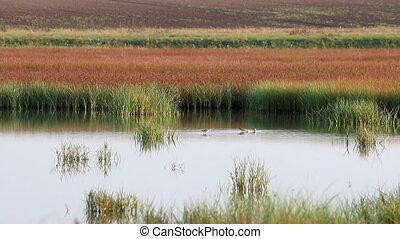 swamp with birds landscape