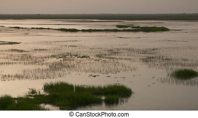 Swampland And Plains - Steady, medium wide shot of swampland...