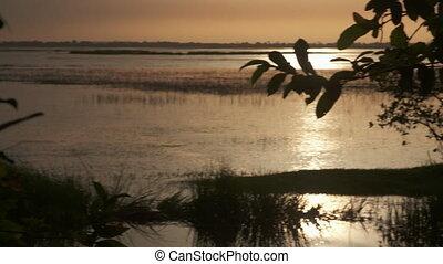 Swampland Between Trees - Handheld, panning, medium wide...