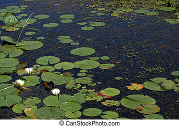 swampland, lis