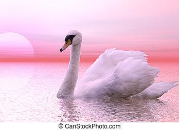 Swan - A graceful swan lit by the dawn light