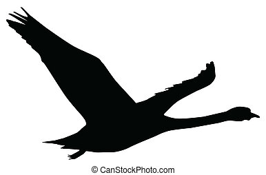 a silouette of a swan flying isolated over white.
