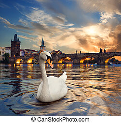 Swan and fiery sunset