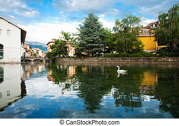 A swan wades in a canal in Annecy, France, a village in the Alps.