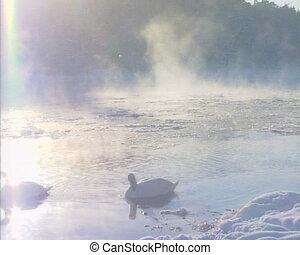 swan bird cyndus river
