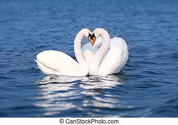 Swan Fall in Love, Birds Couple Kiss, Animal Heart