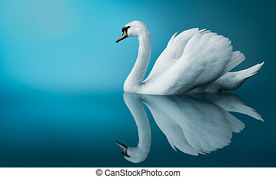 Swan - Fantastic swan over blue background copy space