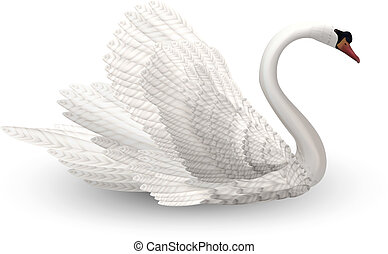 Swan - Vector Swan with curly feathers on white background