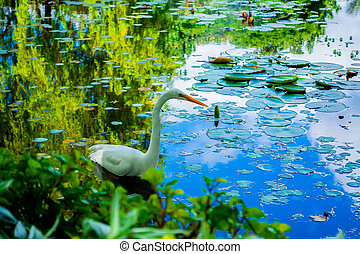 Swan in the lake with grass