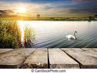 Swan near bridge