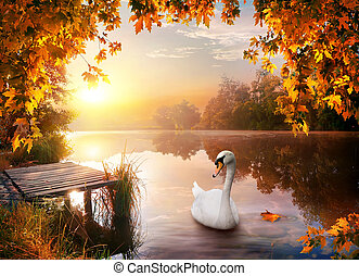 Swan on autumn river