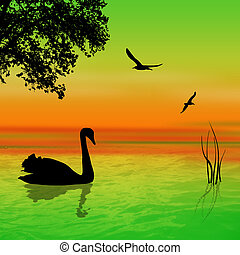 Swan on the lake in beautiful landscape sunset