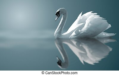 Swan Reflections - A swan