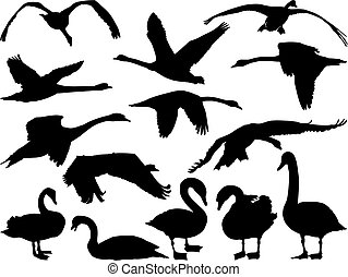 Swan Silhouette - Swan silhouette in different positions