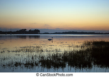 Swan Sunset - Bosham, West Sussex, England - Winter...