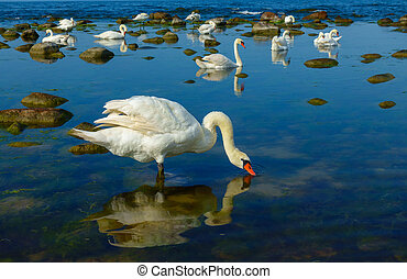 Swans at the sea landscape