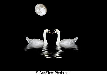 Swans Bathing In Moonlight