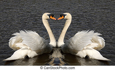 Two swans together forming a heart shape.