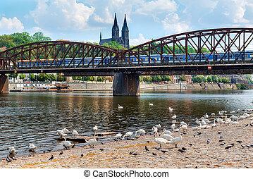Swans near Railway bridge