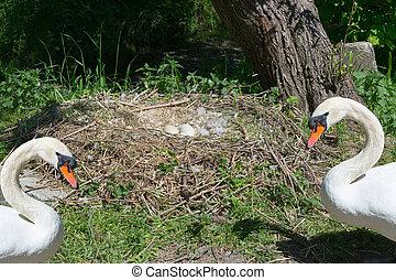 swan's, nest, in, heiligenhaus