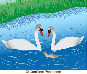 Swans on lake - Family of swans floating on lake it is close...