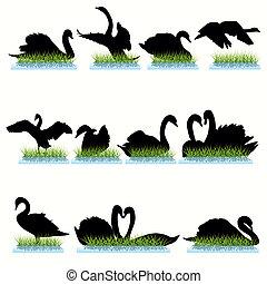 Swans Silhouettes set