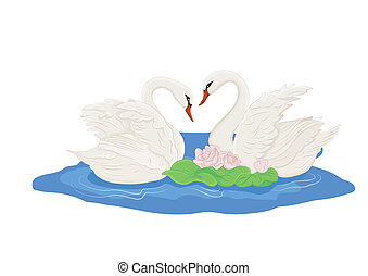 swans - Two white swans on the water