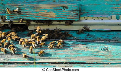 swarm of bees at the entrance to the hive, motion