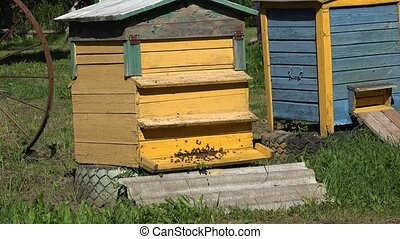 swarm of bees fly to wooden beehive in summer green garden....