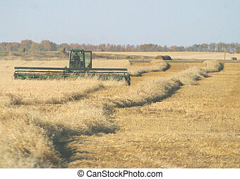 swather in field