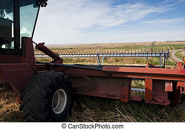 Swather's view of harvest time