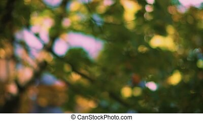 Swaying leaves in the wind with a bright summer sunny green background out of focus
