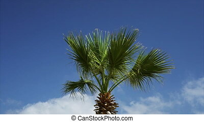 Swaying palm tree against the blue sky