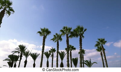 Swaying palm trees against the blue sky