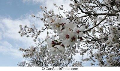 sways, fleurir, wind., branche