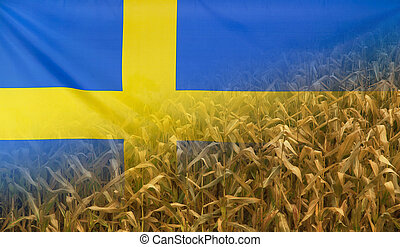 Sweden Nutrition Concept Corn field with fabric Flag