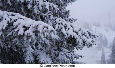 Sweden snow tree