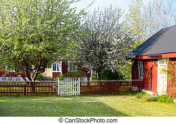 Swedish farmhouse and barn in spring with blooming fruit trees and green meadow with daisies.