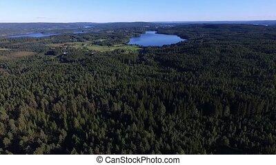 swedish forest in summer - sweden