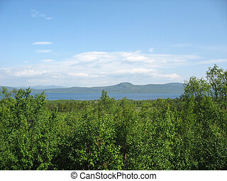 Lapland flora in the north of Sweden