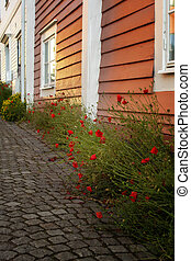 Swedish picturesque street with cobblestones and poppies.