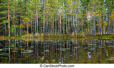 tarn with reflection of pine trees