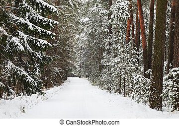 Swedish winter landscape in Sweden